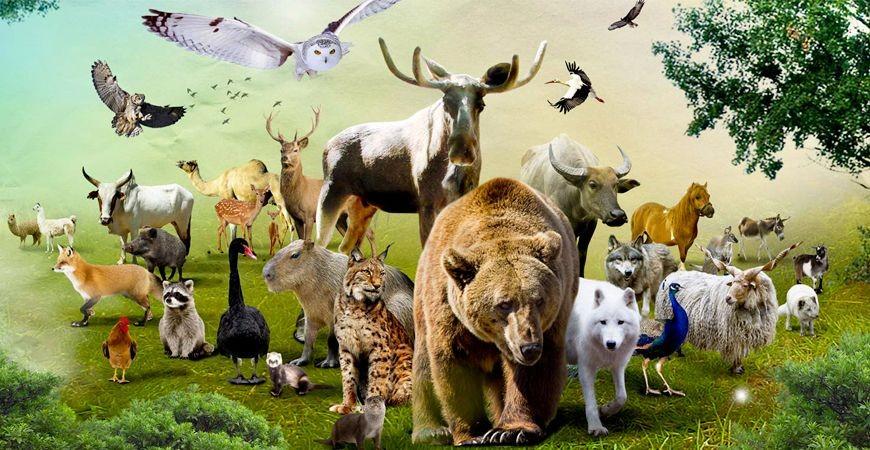 Un Zoo à domicile !